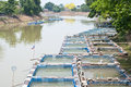 Fish cage farming in the river. Royalty Free Stock Photo