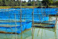 Fish cages in pond Royalty Free Stock Photo