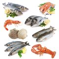 Royalty Free Stock Photos Fish collection