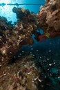Fish and coral in the Red Sea. Royalty Free Stock Photo