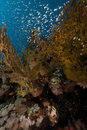 Fish and coral in the Red Sea. Royalty Free Stock Image