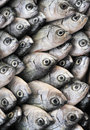 Fish on display at market Stock Photography