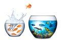 Fish escape to freedom concept