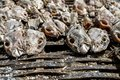 Fish exposed at a market in Africa fresh from the boat Royalty Free Stock Photo