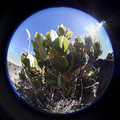 Fish eye view of plants and rocks through a lens on the side haleakala volcano on the island maui Stock Photos