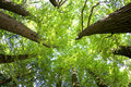 Fish-eye view of Trees in a Forest in Summer Royalty Free Stock Photo
