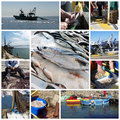 Fish and fishing collage Stock Photography