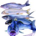 Fish five species of seafood Stock Photography