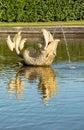 Fish Fountain In Peterhof, Rus...