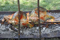 Fish on the grill wooden fork baked over a fire in countryside Stock Photo