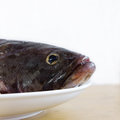 Fish the head of the fresh and delicious Stock Images