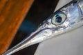 Fish head on white background. Sea fish Flute closeup. Narrow long fish head.