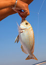 Fish on the hook against blue sky Stock Photography