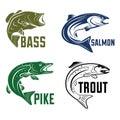 Fish Illustration Bass