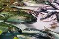 Fish on the isemarkt hamburg Royalty Free Stock Images