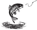 Fish jumping out of the water Royalty Free Stock Photo