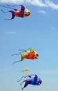 Fish kites three colorful shaped fly in a blue sky Royalty Free Stock Image