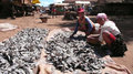 Fish madagascar betafo women drying on the street in betafo Stock Photography