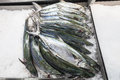 Fish Market Barracuda Ice Trays Stock Images