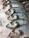 Fish market fresh on display laid on ice platform Royalty Free Stock Photo