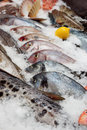 At the fish market great amount of fresh on stall Royalty Free Stock Images