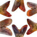 Fish parts composition Royalty Free Stock Photo