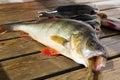 Fish perch Royalty Free Stock Photo