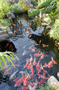 Fish pond Stock Image