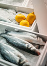Fish ready to be sold fresh snook gourmet market with yellow lemons and clean ice Royalty Free Stock Photo