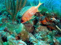 Fish on a Reef Royalty Free Stock Photo