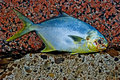 Fish on rock Royalty Free Stock Photo