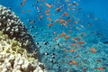 Fish school underwater life of red sea in egypt saltwater fishes and coral reef Stock Photos