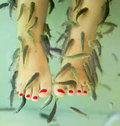 Fish spa pedicure Royalty Free Stock Photos