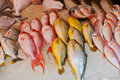 Fish stall, Hong Kong Royalty Free Stock Photos