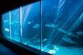 Fish swimming in a darkest tank at the aquarium Stock Photo
