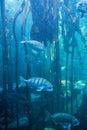 Fish swimming in a tank with algae at the aquarium Royalty Free Stock Photos