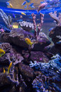 Fish swimming in a tank with coral at the aquarium Stock Photography