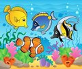 Fish theme image 3 Royalty Free Stock Photo