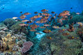 Fish in tropical coral reef Stock Photos