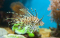 Fish under water photo of Royalty Free Stock Image