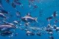 Fish Underwater Royalty Free Stock Photo