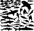 Fish vector set of various silhouettes Royalty Free Stock Image