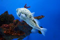 Fish in wuhan polar region ocean world this picture was taken it is unknown Royalty Free Stock Photos