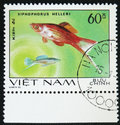 Fish Xiphophorus helleri, stamp is from the series, circa 1980 Royalty Free Stock Photo