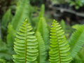 Fishbone Fern leaves The Show Royalty Free Stock Photo