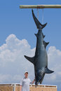 Fisherman with giant mako shark catch posing his of a that is hanging from a pole Stock Photo