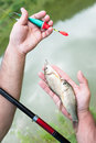Fisherman hands holding a fishing rod and fish Royalty Free Stock Photo
