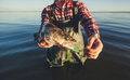 The fisherman is holding a fish Zander caught on a hook Royalty Free Stock Photo