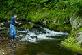 Fisherman trout fishing a small clear stream. Royalty Free Stock Photo