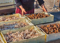 Fishermen with crate of crustaceans and shellfish mediterranean fish seafood fresh Stock Photography